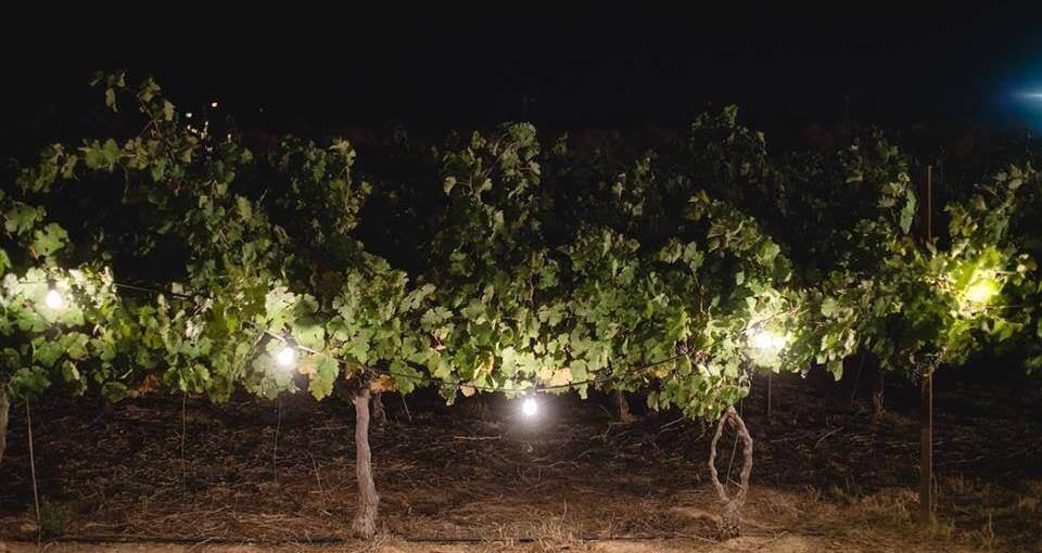 רק החוצה חוות נועם במדבר , מצפה רמון - אירועי לילה - תמונות | Weekend EZ-93